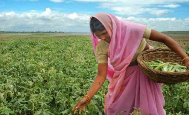 कृषि व्यवस्था में महिलाओ की भूमिका अहम है