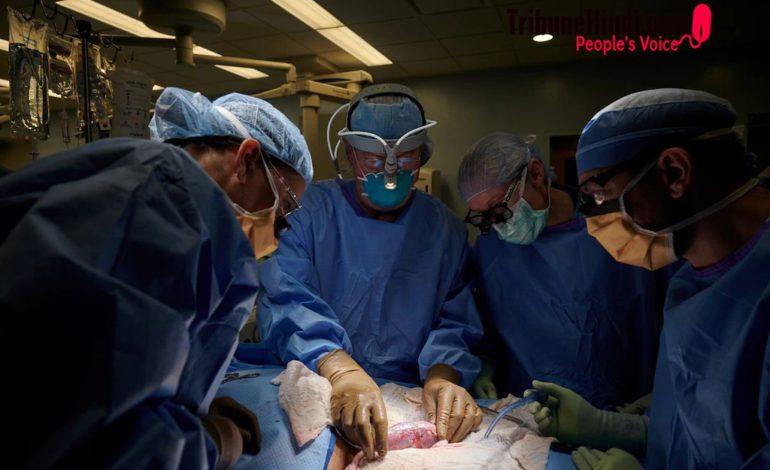 अब इंसानी शरीर मे जानवरों के अंग कर सकेंगे काम, अमेरिकी डॉक्टरों ने की पुष्टि